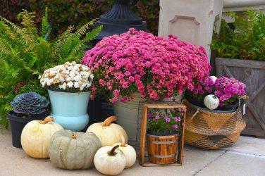 Autumn Ambiance - Living Magazine