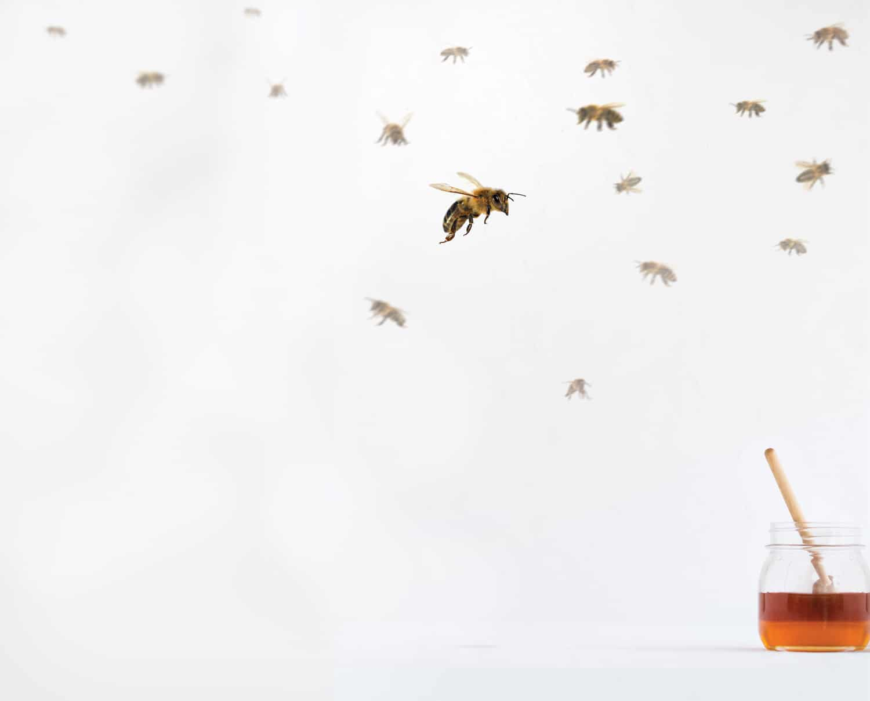 homemade bee hive beekeeping DIY beekeeping tales beekeeping stories