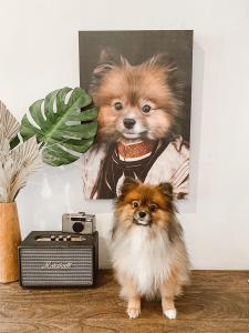 pet portrait giveaway